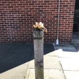 Bananas on Stump