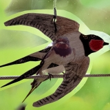 A window view composite swallow decal, Lough Neagh Discovery Centre, Armagh